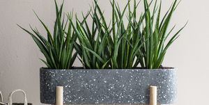 Planten in plantenbak