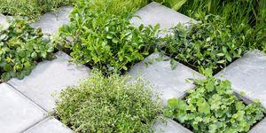 Tuin met planten en tegels