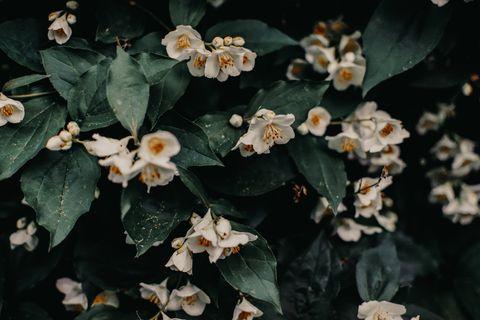 Flower, Plant, Flowering plant, Leaf, Petal, Begonia, Perennial plant,