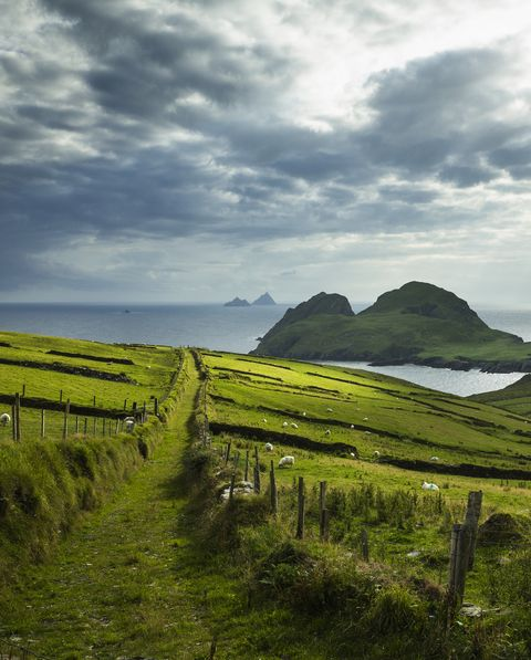 ireland, kerry county  st finians bay, view of puffin island
