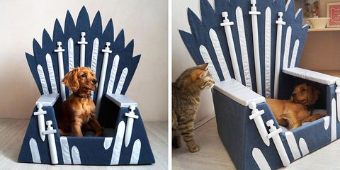 Cat, Felidae, Small to medium-sized cats, Carnivore, Paw,