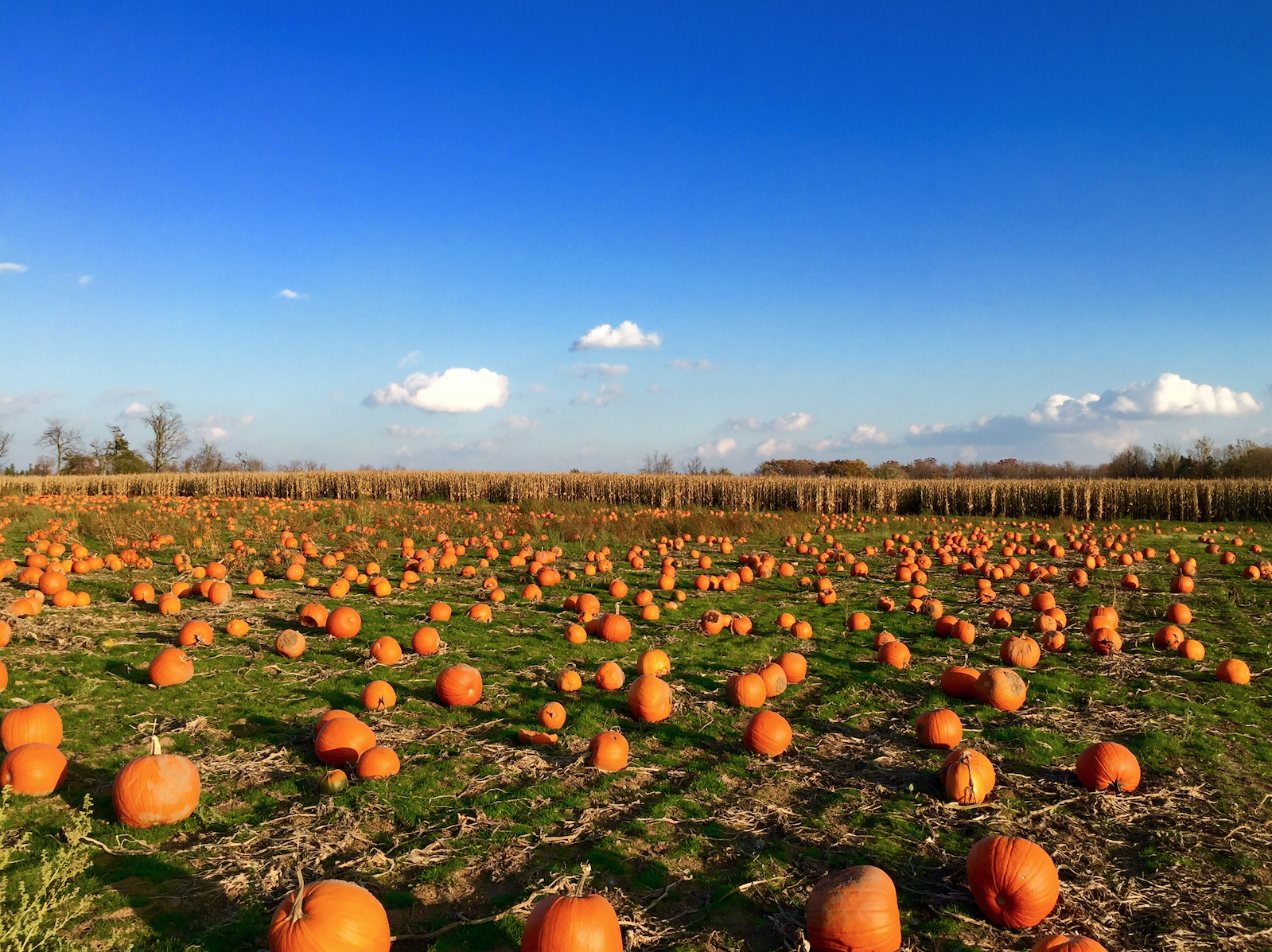 Is Pumpkin a Fruit? Here's Everything You Need to Know