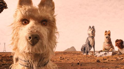 Mammal, Dog, Vertebrate, Canidae, Dog breed, Berger picard, Carnivore, Cairn terrier, Terrier, Australian terrier,