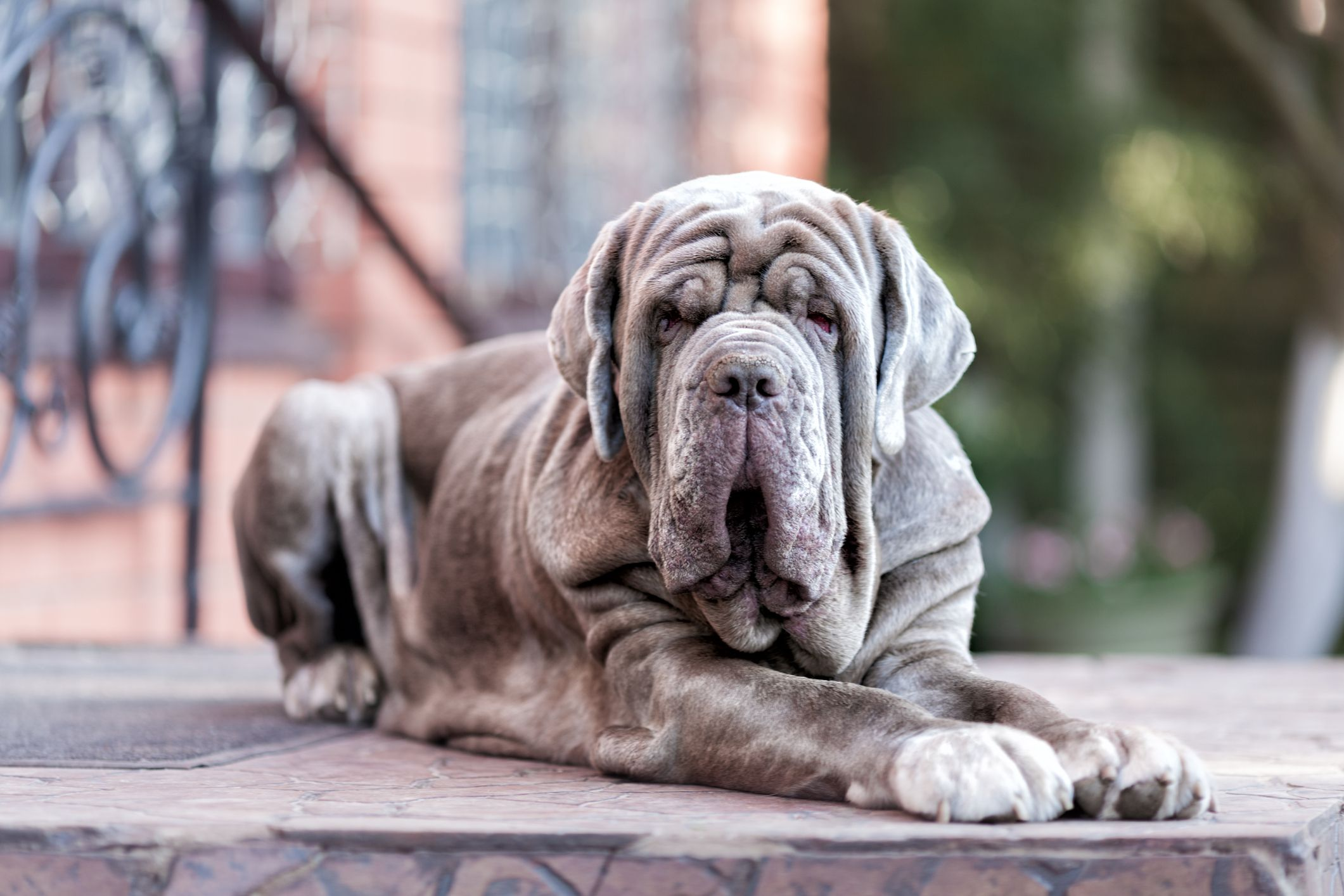 13 Italian Dog Breeds That Are Pure Beauty