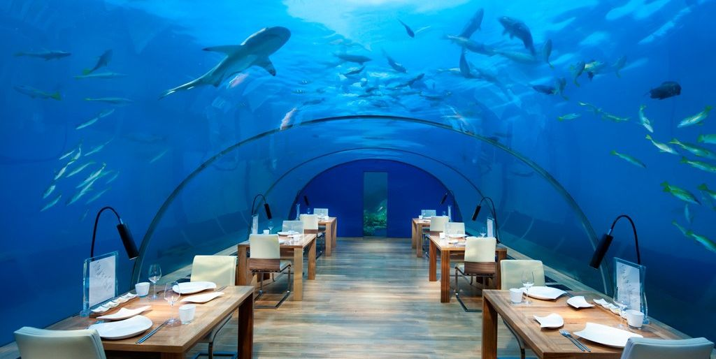 The Best Underwater Restaurants For Shark Viewing Where To Dine Celebrate Week