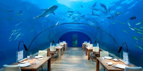 The Best Underwater Restaurants For Shark Viewing Where To
