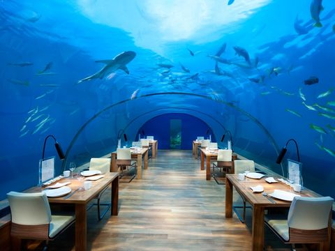 Underwater, Restaurant, Aquarium, Room, Building, Business, Fish, Vacation, Tourism, Fish,