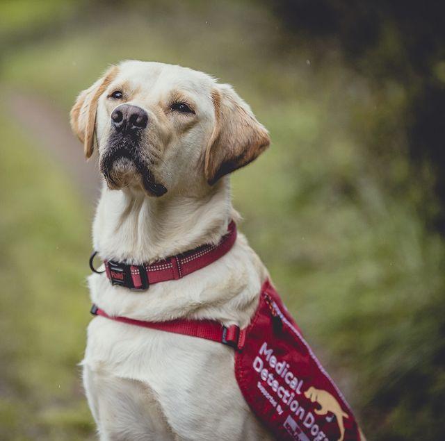 ivan the medical detection dog