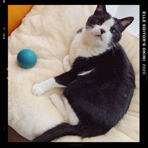 Cat, Small to medium-sized cats, Felidae, Whiskers, Nose, Black cat, Carnivore, Photo caption, Paw, Photography,