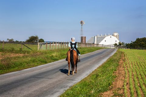 Horse, Bridle, Endurance riding, Trail riding, Road, Rein, Recreation, Mare, Infrastructure, Rural area,