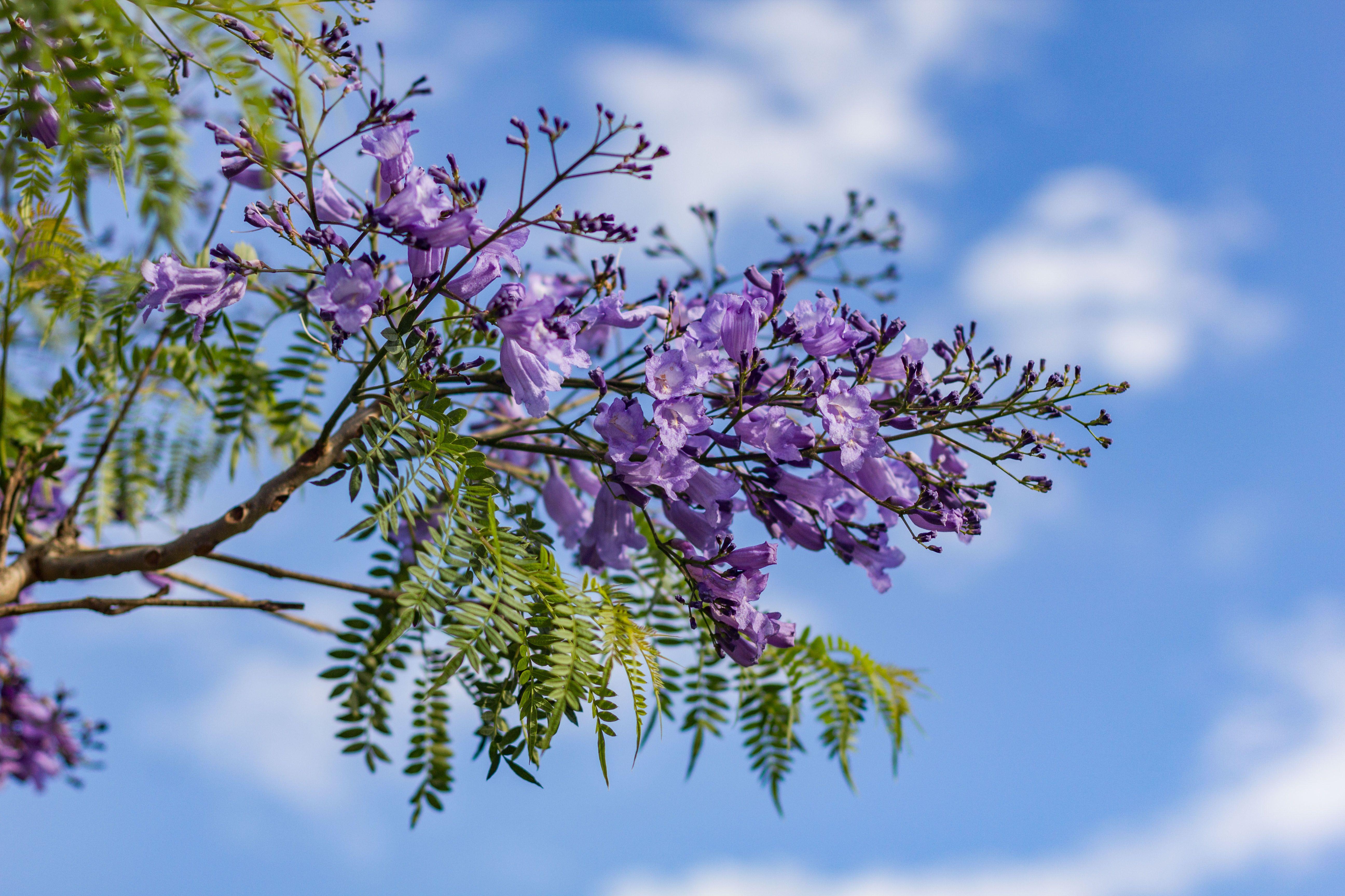 22 Purple Flowers For Gardens