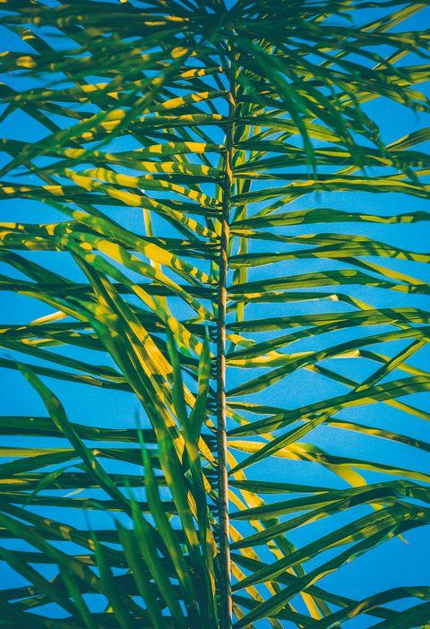 Majorelle blue, Plant, Terrestrial plant, Tree, Line, Plant stem, Parallel,