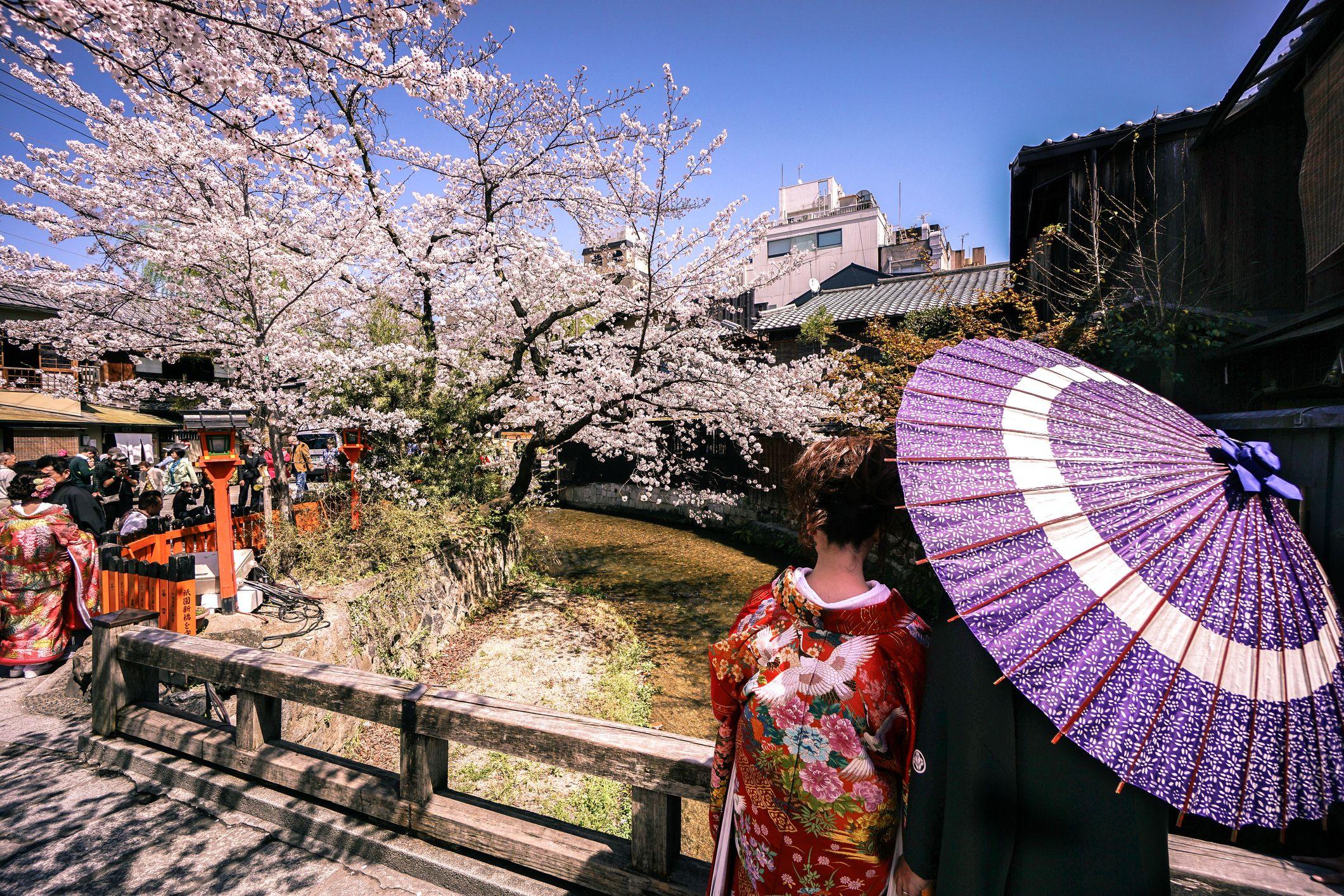 Japanese Couple Wearing Kimono Enjoying Cherry Blossoms in Gion Kyoto Japan