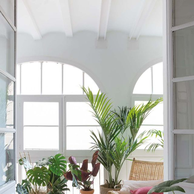 White, Houseplant, Property, Interior design, Room, House, Building, Architecture, Home, Flowerpot,