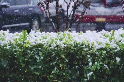 Jardinería: Nieve en las plantas