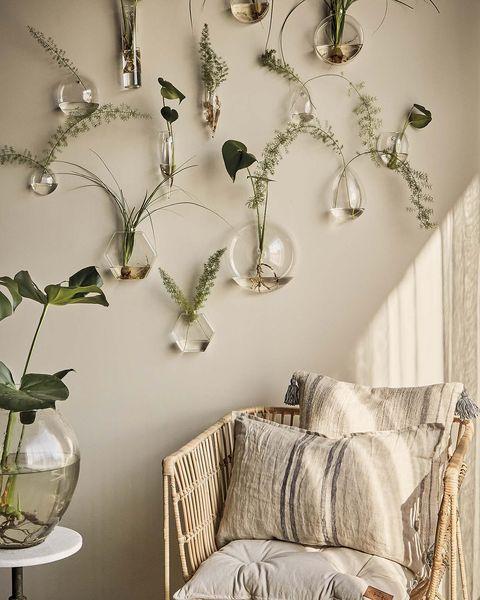jarrones de cristal en la pared con plantas
