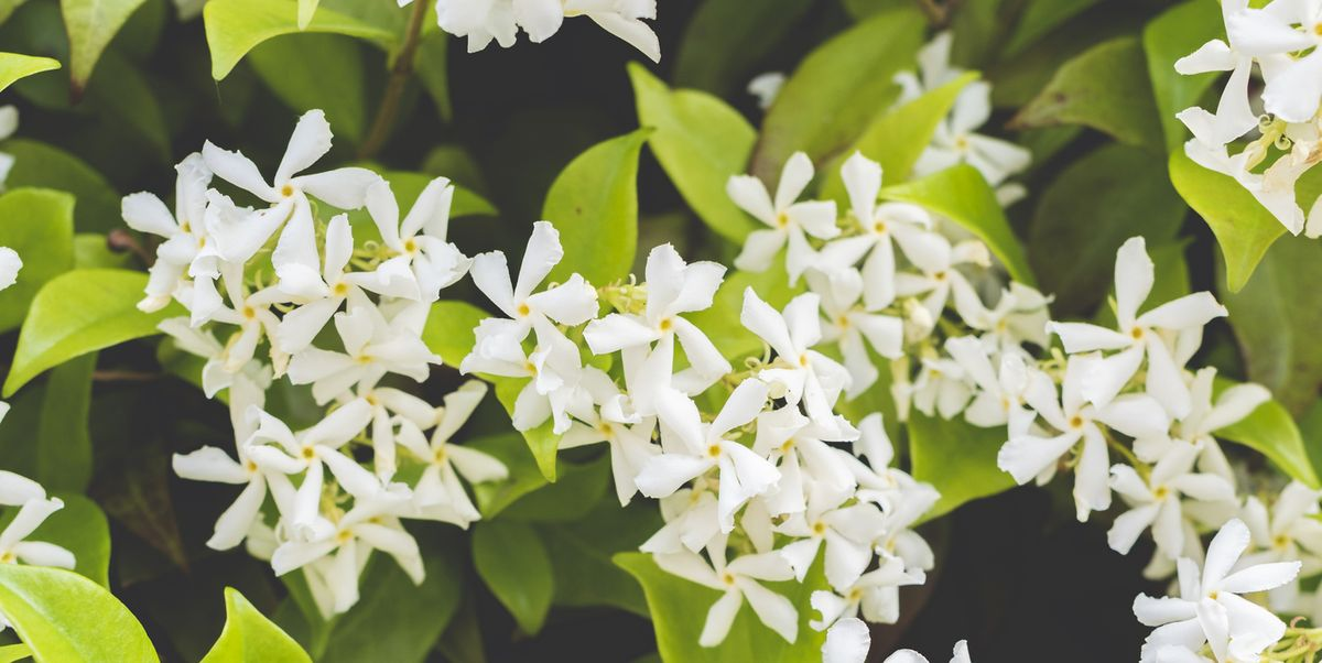 13 plants that can naturally improve our home, health and wellbeing
