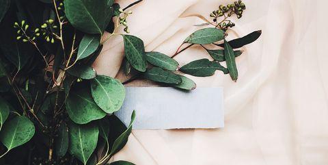 Leaf, Green, Flower, Plant, Branch, Tree, Houseplant, Twig, Flowering plant, Herb,
