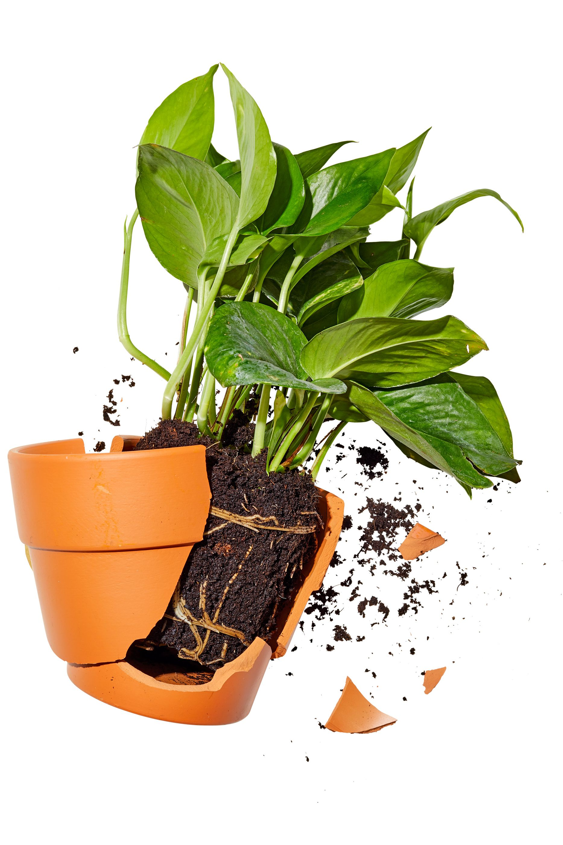 It's Time to Move on From Your House Plants