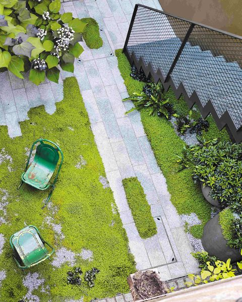Urban mossy garden in Highbury