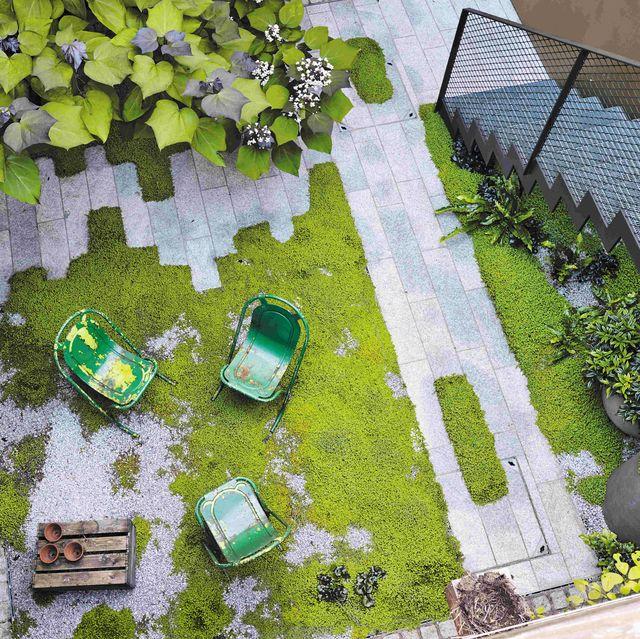 Mossy urban garden in Highbury
