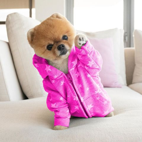 jiffpom - animals to follow on instagram