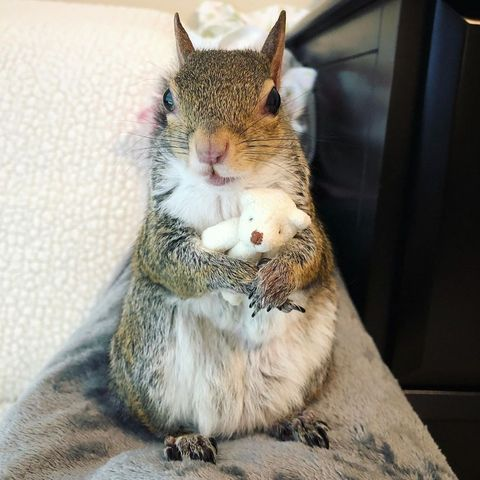jill the squirrel - animals to follow on instagram