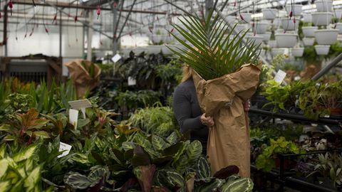 kamerplanten kopen in het tuincentrum