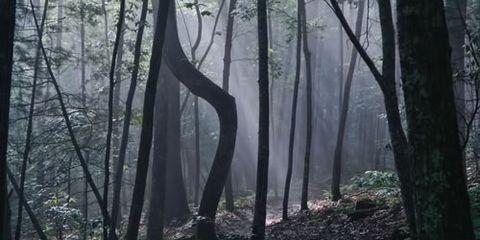 Jim Branch Trail in North Carolina