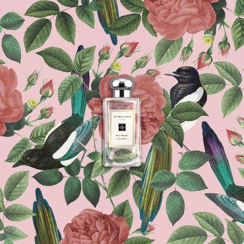 Botany, Bird, Plant, Illustration, Flower, Pattern, Camellia,