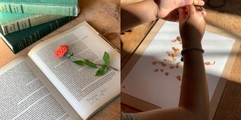 Finger, Hand, Leaf, Botany, Plant, Nail, Flower, Thumb,