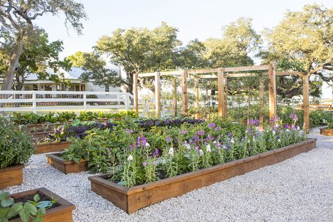 joanna gaines garden produce plants