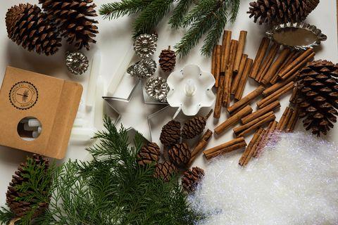 sugar pine, Conifer cone, oregon pine, Colorado spruce, Pine, Cinnamon stick, Tree, Branch, Fir, Conifer,