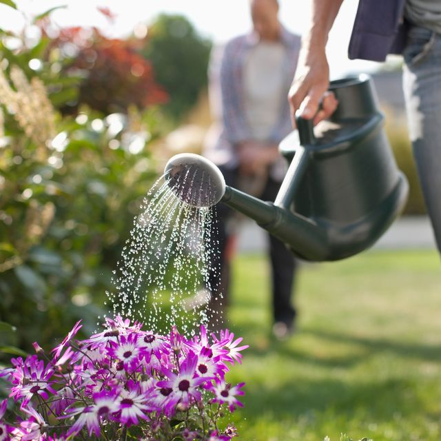 jobs to do in the garden in july