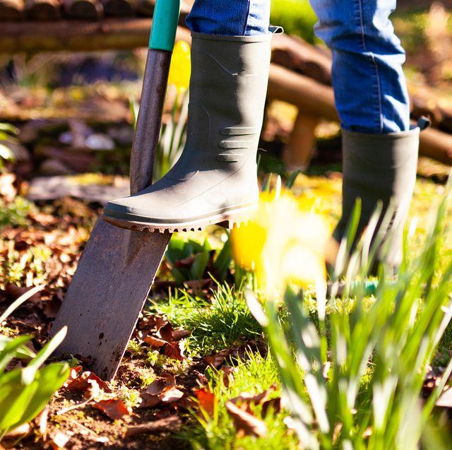 jobs to do in the garden in october
