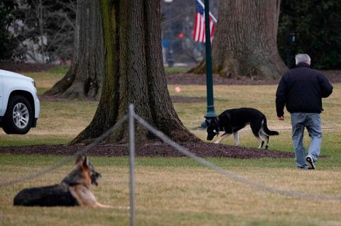 Joe biden chiens grand champion maison blanche pelouse