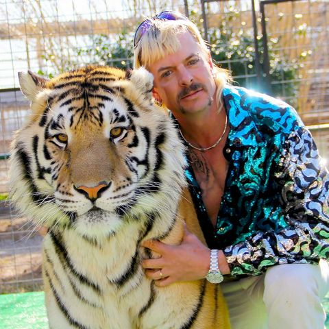 Tiger, Bengal tiger, Felidae, Wildlife, Siberian tiger, Big cats, Carnivore, Whiskers, Terrestrial animal, Snout,