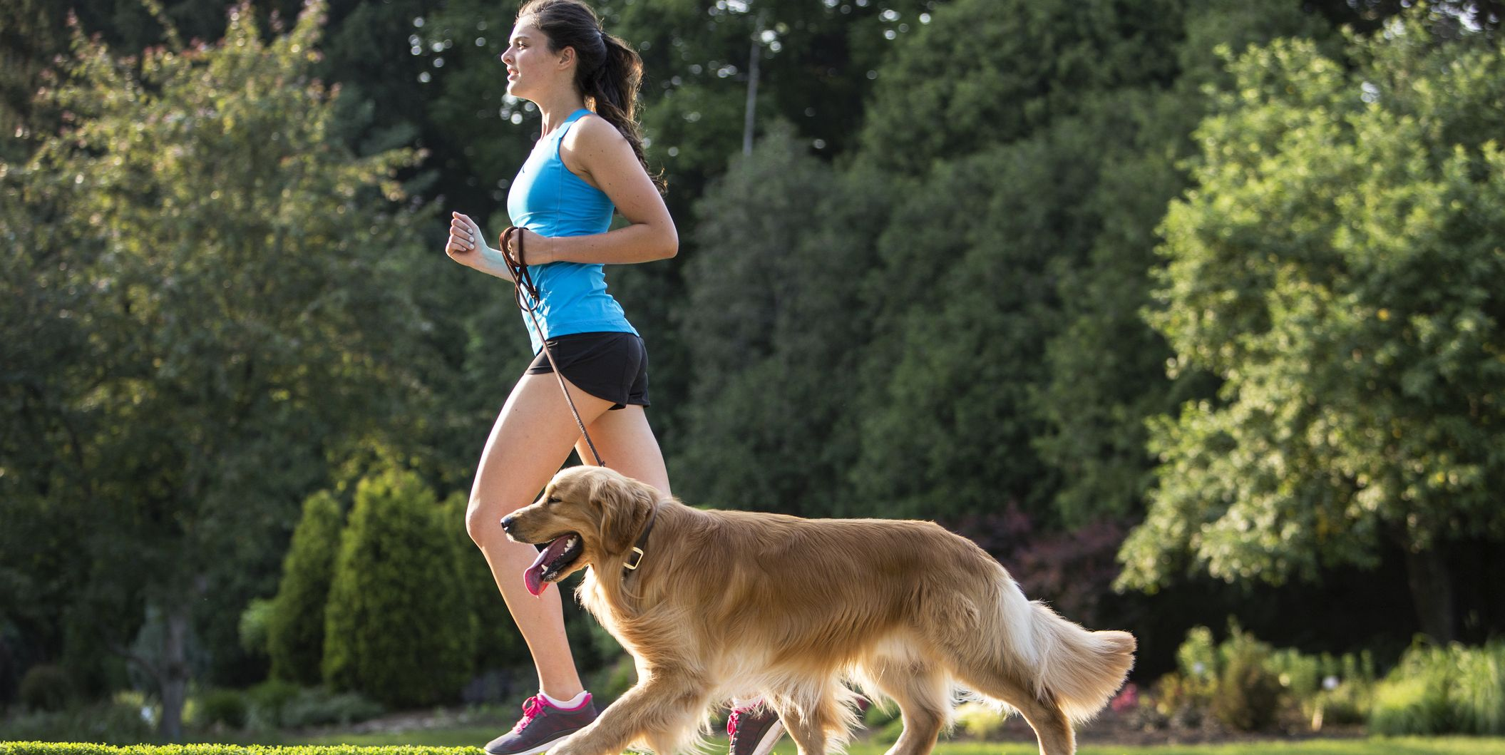 Jogger and Golden Retriever Running on a Paved Trail.