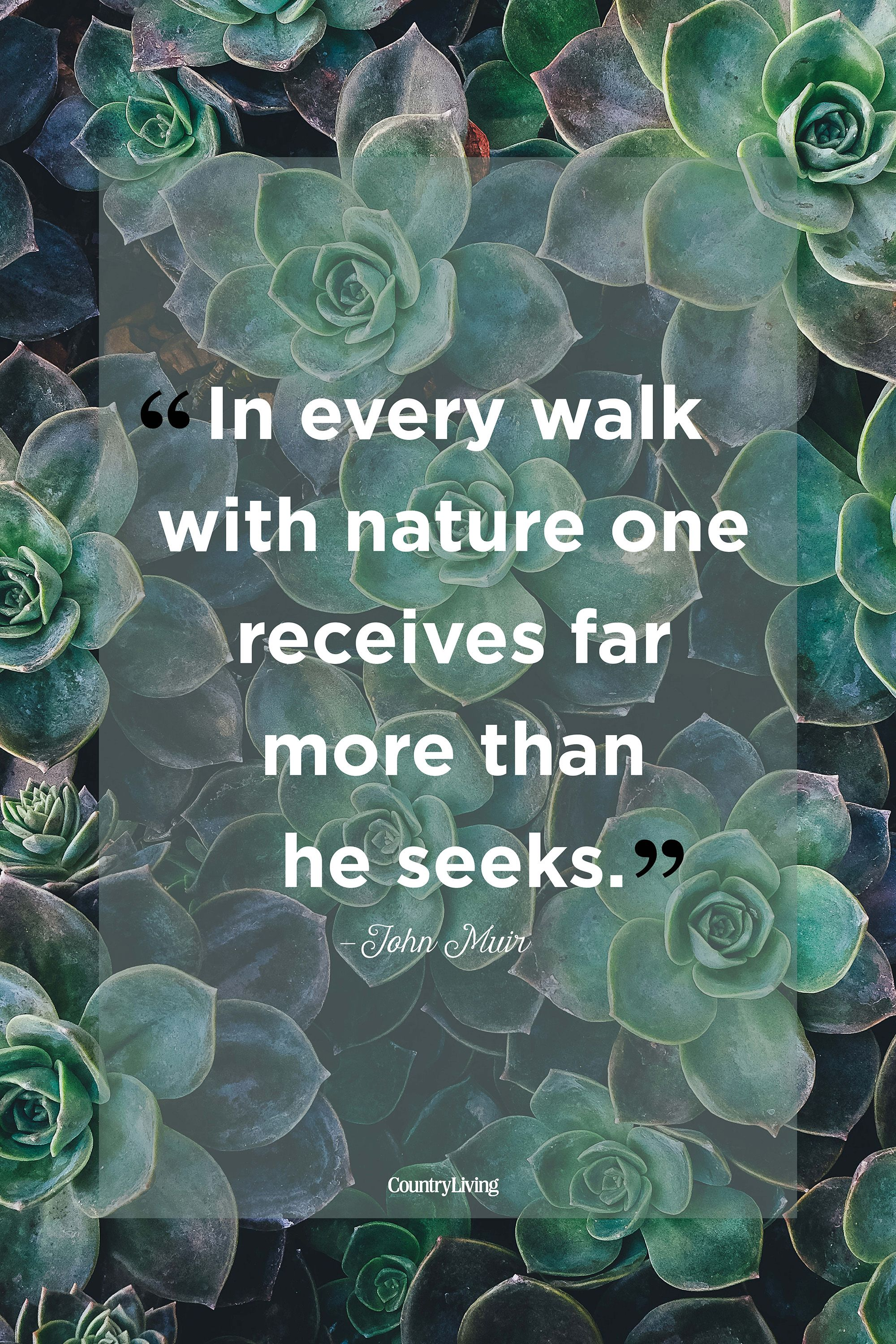 25 Best Nature Quotes Inspirational Sayings About Nature