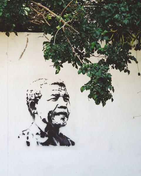 Green, Wall, Tree, Art, Street art, Leaf, Illustration, Plant, Branch, Stencil,