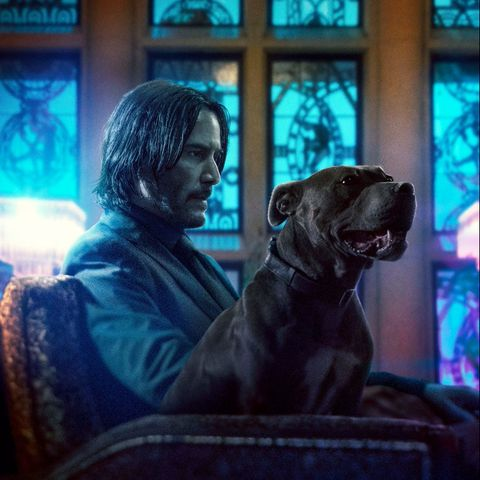 Movie, Sporting Group, Window, Guard dog, Canidae,
