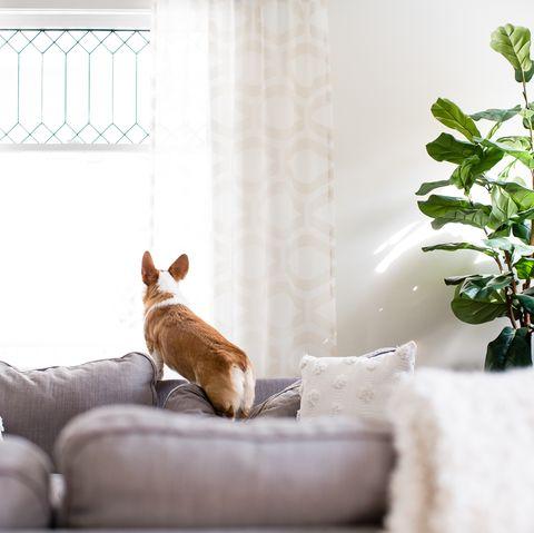 colocataires vs locataires en commun, un accord de cohabitation peut inclure la responsabilité des animaux de compagnie si la relation prend fin