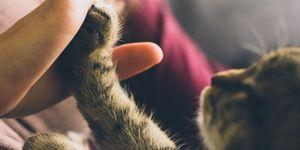 kat-high-five-baasje
