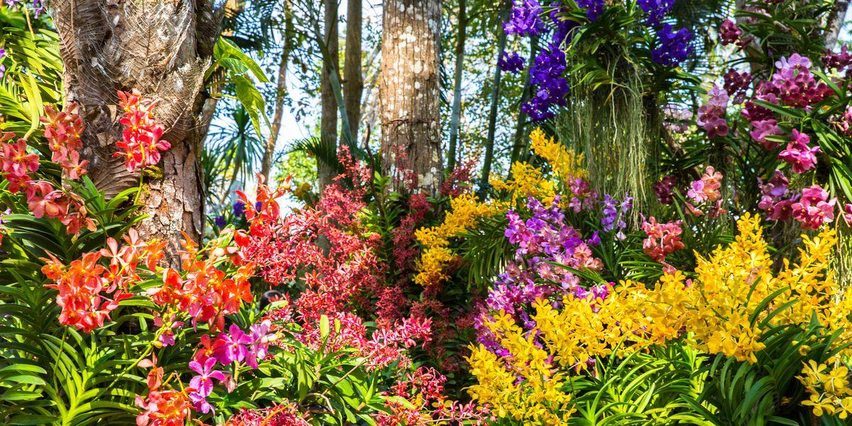 How To Create A Joyful Garden Gardening To Boost Your Mood