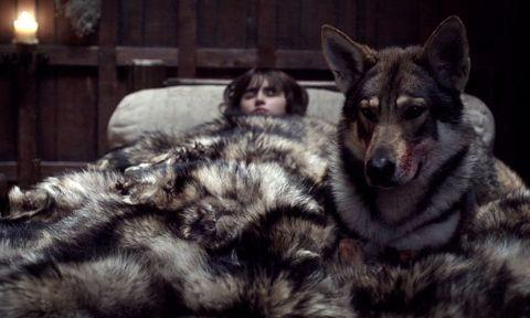 """'Juego de tronos': El """"lobo"""" de Bran Stark ha fallecido"""