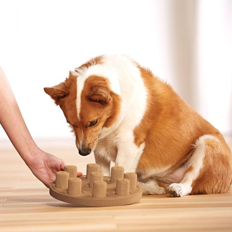 Juguete de madera para perros