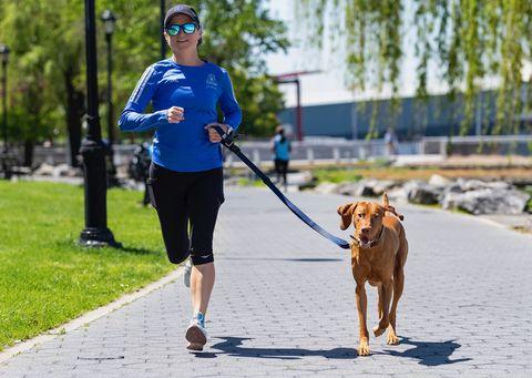 Dog, Mammal, Canidae, Leash, Dog walking, Dog breed, Carnivore, Recreation, Cani cross, Running,