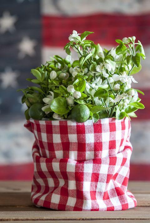 Flowerpot, Green, Plant, Leaf vegetable, Herb, Flower, Table, Vegetable, Textile, Linens,