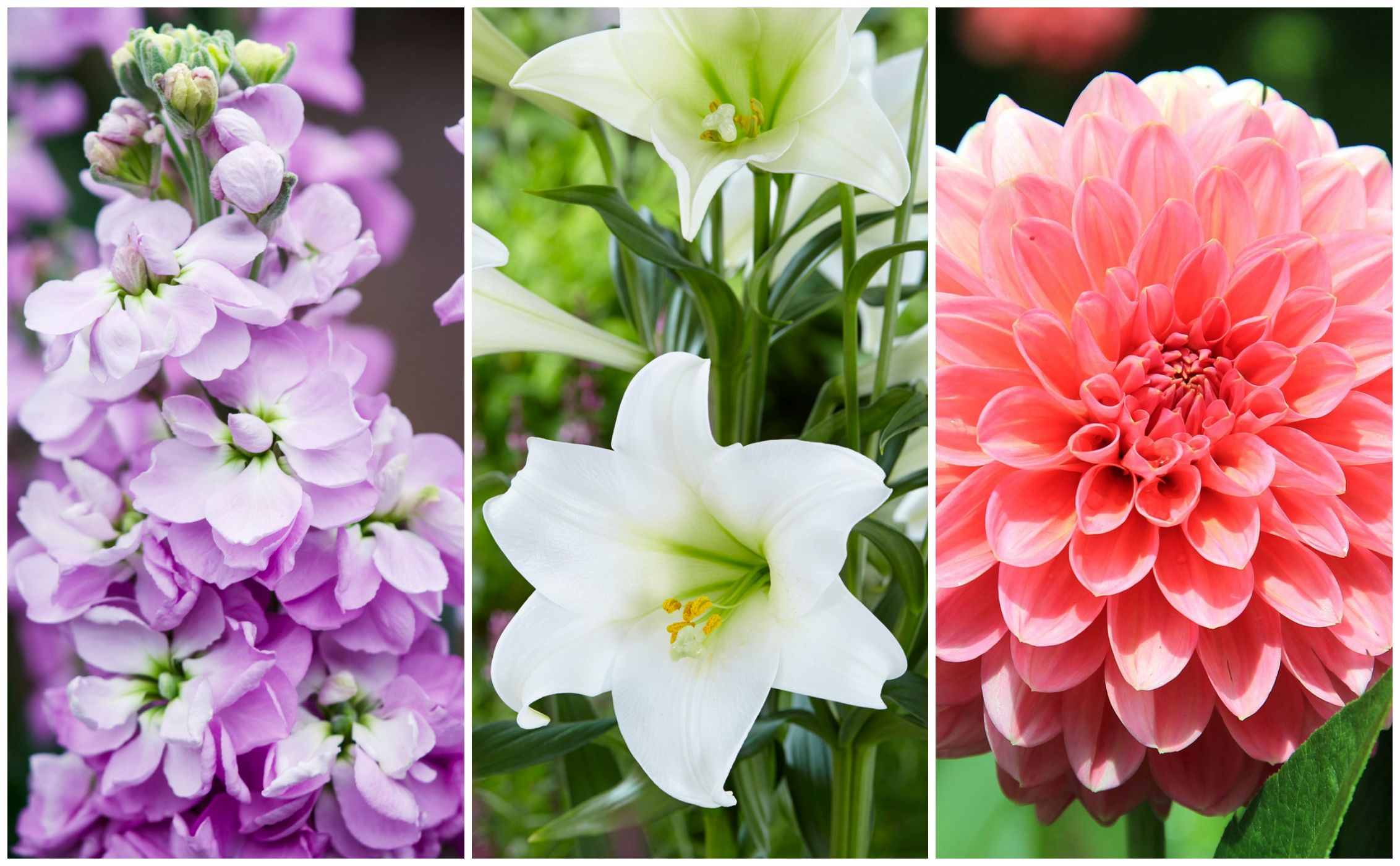 10 British flowers that bloom in July