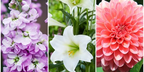 10 summer flowers that bloom in july best seasonal flowers uk